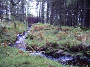 Stream running through woods